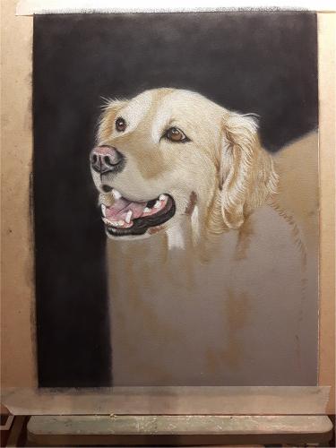 golden-retriever-portrait4
