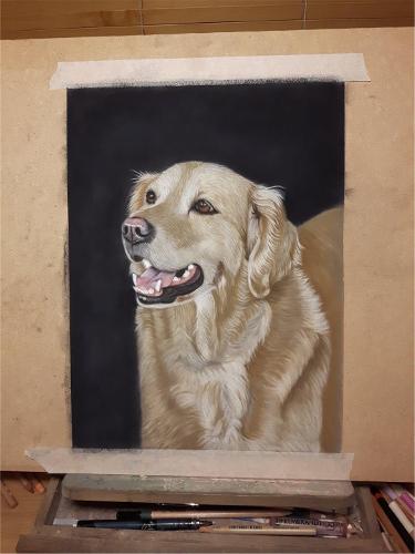 golden-retriever-portrait6