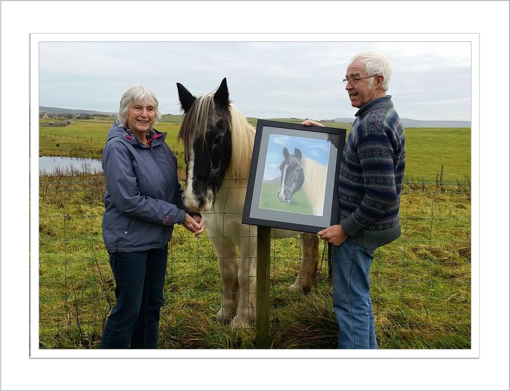 Tamara the Orkney Island Horse