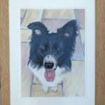 framed-border-collie-dog-portrait