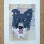 framed-border-collie-dog-portrait