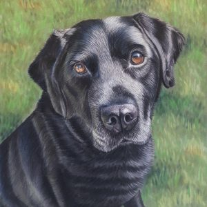dog portrait in soft pastel