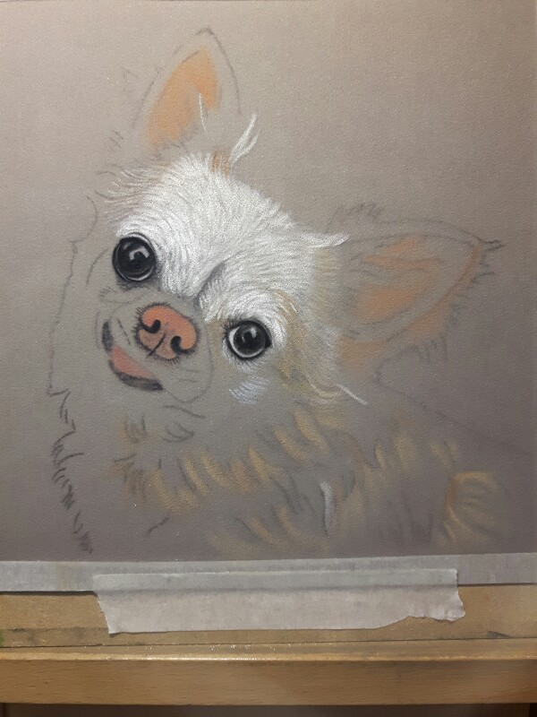 Chihuahua In Soft Pastel Portraits From Photos By Sue