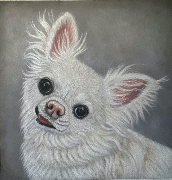 Chihuahua in Soft Pastel