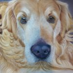 Pet portrait of a labrador called Woody