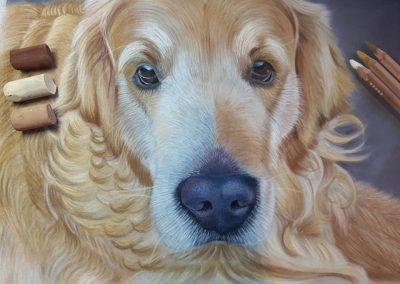 Pet-Portrait-Labrador