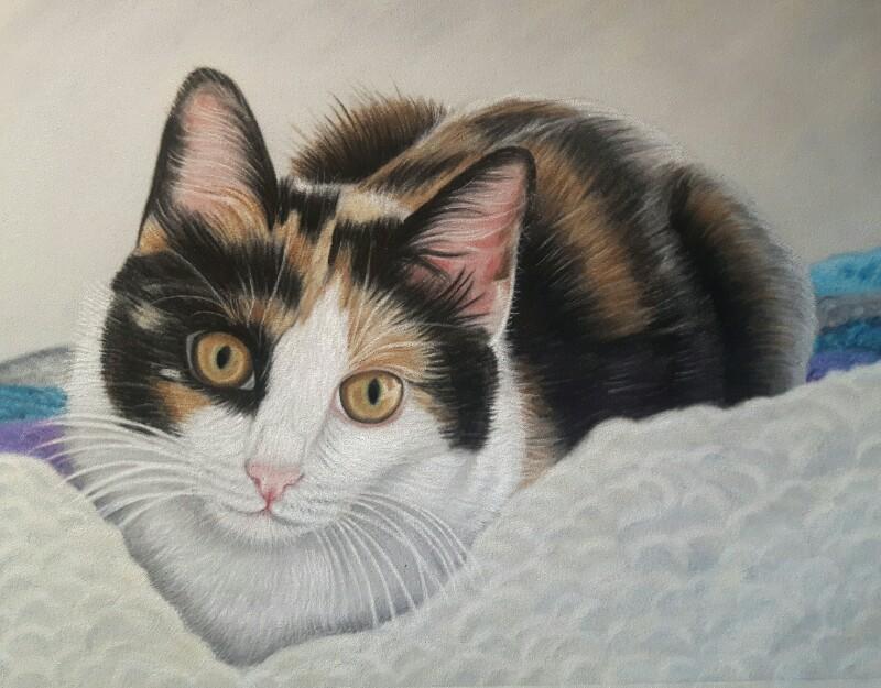 kitten portrait holly