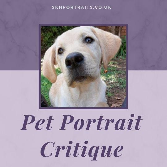 Critique – Pastel Pet Portrait