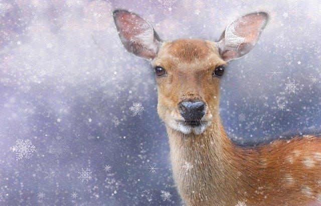 snowy deer scene