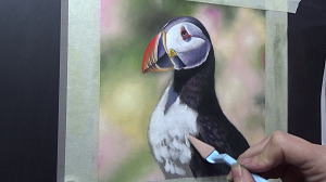 puffin using soft pastel